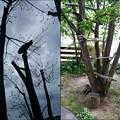 木の上のすずたろう
