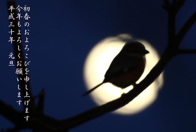 満月もっちゃん