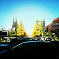 写真: 神宮外苑いちょう並木道