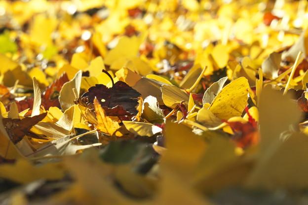 写真: 陽だまりで落葉たちのつぶやき