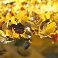 陽だまりで落葉たちのつぶやき