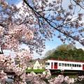 写真: いちご電車サクラ03