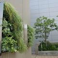 緑の癒し:天空農園08