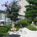 写真: 安らぎの庭:都会オアシス13
