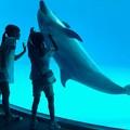 写真: 触れ合い:イルカと少女05