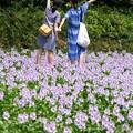 写真: 記念撮影:ホテイアオイ07