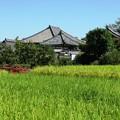 秋風景:飛鳥寺02