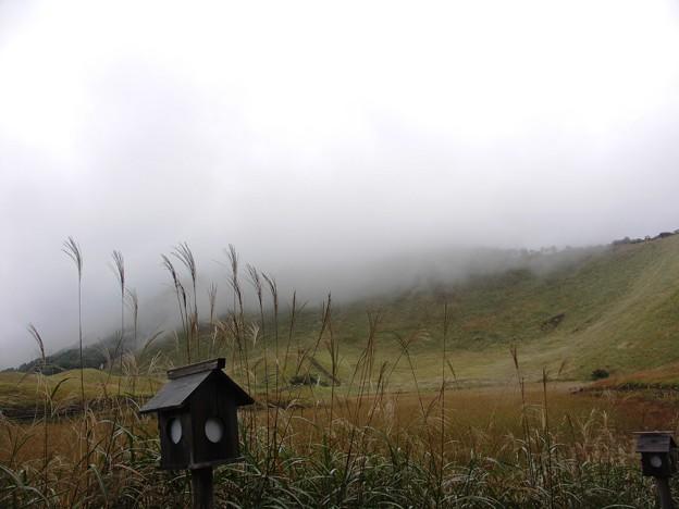 霧に包まれて:曽爾高原05
