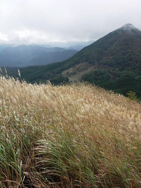 写真: 黄金色の輝き:曽爾高原32