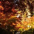 写真: 蛇腹道:高野山紅葉03