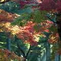 写真: 光芒:高野山紅葉63