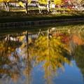 Photos: 逆さ黄葉:高野山紅葉40