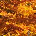 写真: 秋色高野山04