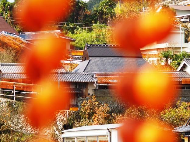 晩秋の趣:串柿の里02