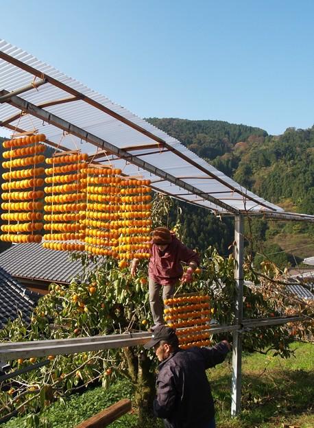 晩秋の風物詩:串柿の里11