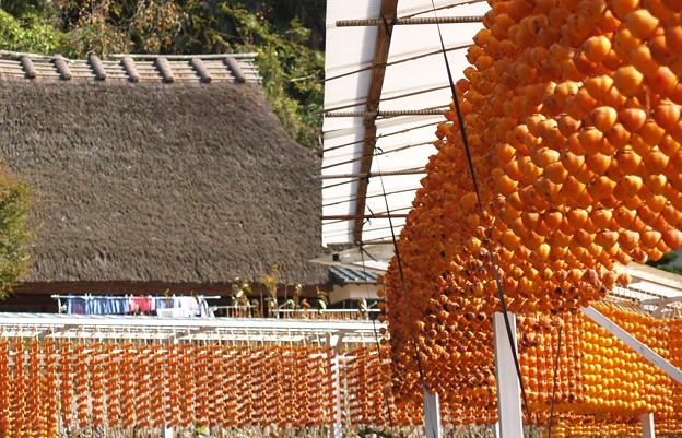 四百年の歴史:串柿の里19