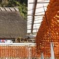 写真: 四百年の歴史:串柿の里19