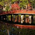 写真: 水鏡:高野山紅葉46