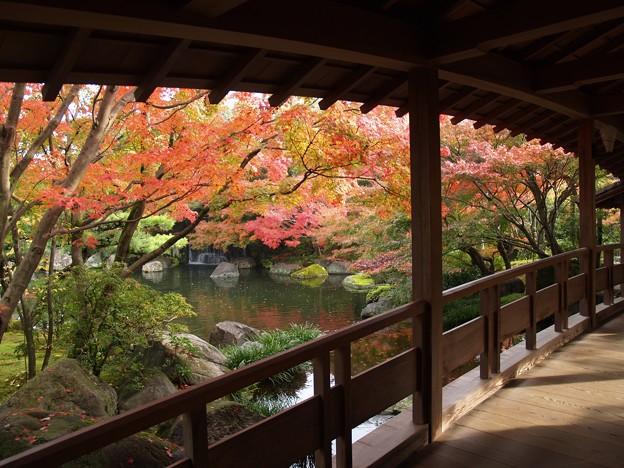 Photos: 姫路城西御屋敷跡庭園:秋景色好古園06