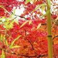 彩り競演:秋景色好古園79