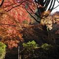 写真: 古寺の彩り:延命寺晩秋02
