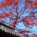 写真: 屋根より高く:金剛寺晩秋02
