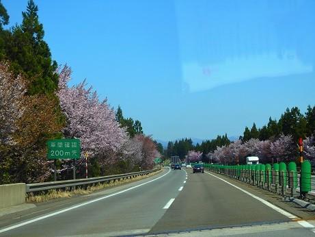 桜の花道^^東北自動車道