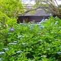 写真: 北鎌倉~東慶寺