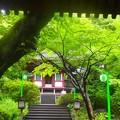 緑の庭園~高輪プリンスホテル