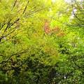 写真: 上野公園~黄葉