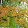 写真: 上野公園~不忍池