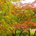写真: 紅葉~徳川庭園