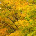 写真: 紅葉~名古屋市大曾根