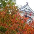 写真: 福山城~紅葉