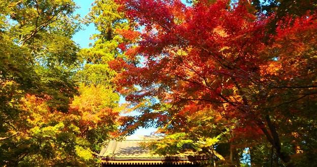 写真: 紅葉~北鎌倉 円覚寺