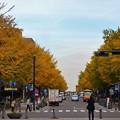 写真: 横浜~日本大通り
