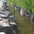 写真: P9940724