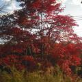写真: 夕日と紅葉