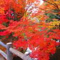 写真: 美しきかな秋色