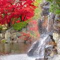 写真: 滝に見とれて