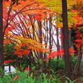 写真: 笹と紅葉