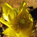 写真: 美しい黄金色