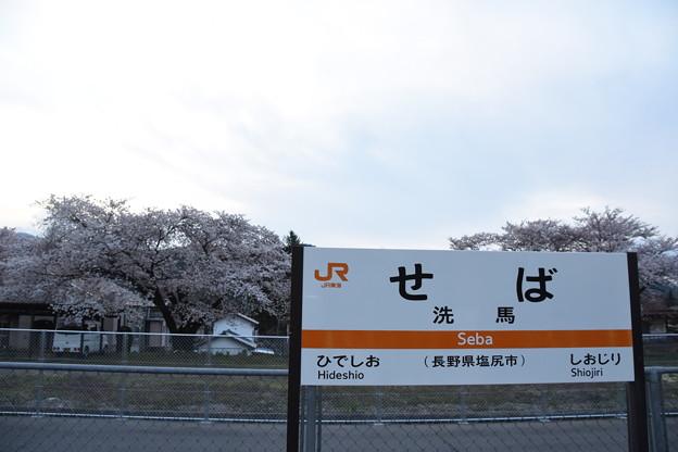 Photos: 洗馬駅の桜