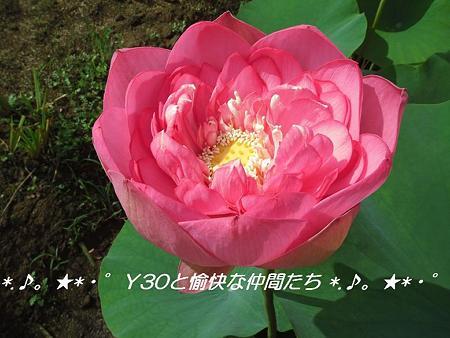 DSCF0041_pa