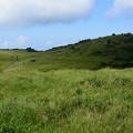 写真: 山頭草原