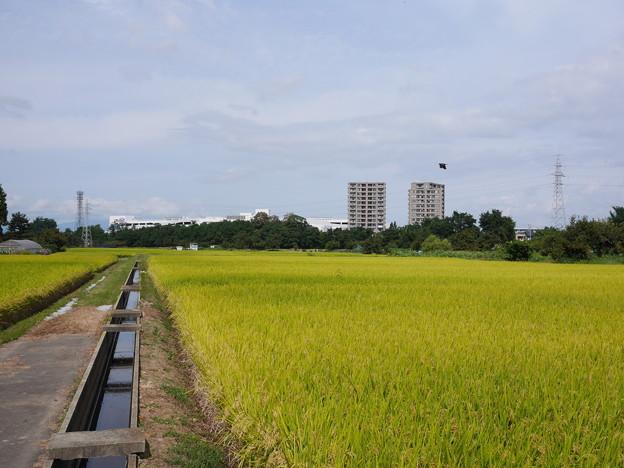 写真: 収穫は近い