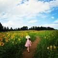 写真: ひまわり畑♪