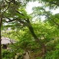 写真: 庭園 新緑
