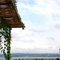 写真: 河北潟と朝顔