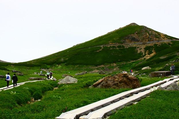 乗鞍 お花畑と木道  背景は富士見岳